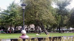 Parque de San Francisco (Jusotil_1943) Tags: parque sentada entrearboles arboles torcido farola arcos