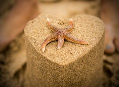 Star Fish Sand Castle (razorlitexx) Tags: starfish sandcastle threecliffsbay beach sea coast sand