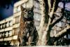 Hellcat (Aleksandar M. Knezevic Photography) Tags: belgrade beograd serbia srbija street urban streetphoto streetphotography cats pets funny grummpy grmppycat