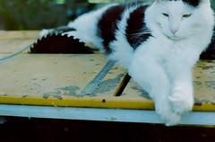 Portra 160 - gremlin (burntfeather) Tags: colourfilm kodak olympus film om1 portra160 filmcamera filmphotography cat gremlin