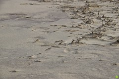 Sparse (petrOlly) Tags: europa europe germany deutschland borkum island ostfriesland eastfrisia northsea nordsee nature natura przyroda