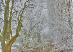 * Nel silenzio intorno #2 * Around in the silence * (argia world 1) Tags: alberi trees cespugli bushes erba grass brina frost foschia mist nebbia fog campagna paesaggiocampestre countrysidelandscape inverno winter