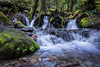 Tree Root Falls (Matt Straite Photography) Tags: water falls raiver stream rocks tree roots nature opal creek landscape oregon