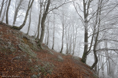 The frozen Forest (Hector Prada) Tags: bosque hielo invierno hayedo atmosfera niebla camino arbol hojas forest ice frozen tree mist fog path mood morning winter leaves naturaleza nature hectorprada paísvasco basquecountry cencellada