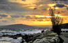 _DSC1029_1 (silviu_z) Tags: sunset downtown down blacksea sun clouds storm sony ilce7rm3 nature outdoor tree balchik waterscape landscape orange