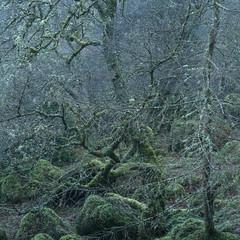 Froth (jellyfire) Tags: distagont3518 landscape landscapephotography sonnartfe55mmf18za sony sonya7r sonyfe70200mmf40goss winter ze zeissdistagont18mmf35ze leeacaster snowdonia wales wwwleeacastercom zeiss