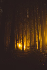 nights on campus (catklein) Tags: ucsc night golden fog redwood tall tree