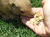 Comiendo de la mano (Eva Cocca) Tags: naturaleza nature animal zoo comiendo eating mano hand