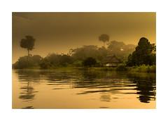 """""""Al amanecer, entre espesos vapores, la selva era un fantasma lleno de gritos lúgubres, después una luz amarilla lo iba envolviendo todo"""" (David G. Ouellette) Tags: yarina pacayasamiria amazonia peru"""