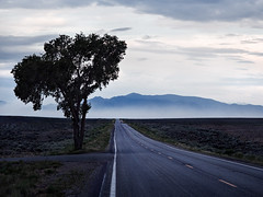 Lone Tree Lane (#XXIX#) Tags: taos american southwest west east bus tree mountains horizon smoke smoky haze fog twilight evening cool blue clouds field grass desert olympus omd em5 163mp mzuiko digital 1240mm f28 pro fourthirds