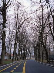 Craiova, România (marioandrei) Tags: mediumformat 120 120film fujifilm ga645 60mm provia 100f