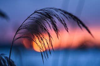 Macro and sunset.