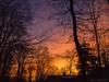 WM Sunrise_4444 (smack53) Tags: smack53 sunrise morning morningsky earlymorning bluehour goldenhour paintedsky sky trees silhouettes westmilford newjersey fuji fujifilm fujifinepixa805 finepix a805 scenic scenery pointandshoot winter wintertime