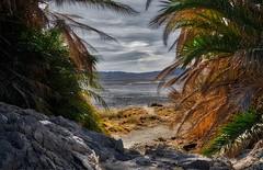 Soda Lake Dry Lake (Jason DM) Tags: hidden nikon lost mojave desert ca california retreat spa health nature lake dry beach forgotten zzyzx trees palm