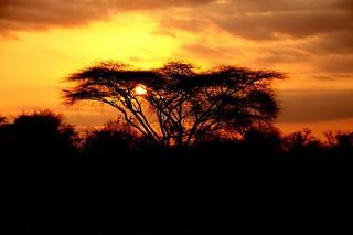 Zimbabwe Cape Buffalo Hunt 89
