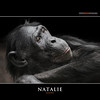 NATALIE (Matthias Besant) Tags: affe affen affenfell animal animals ape apes pygmychimpanzee fell zwergschimpanse hominidae hominoidea mammal mammals menschenaffen menschenartig menschenartige monkey monkeys primat primaten saeugetier saeugetiere tier tiere trockennasenaffe bonobo schauen blick blicken augen eyes look looking natalie zoo zoofrankfurt matthiasbesant hessen deutschland