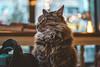 Sleepy (WeekendPlayer) Tags: sleepy sleep cat animal pet cute fluffy bokeh bokehful indoor istanbul catsofistanbul store shop kedi window