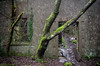 Plas Talysarn Cottage (ShrubMonkey (Julian Heritage)) Tags: plastalysarn cottage gatehouse building tree overgrown decay ruin abandoned derelict lost forsaken dorothea quarry talysarnhall glencottage details green moss growth slate