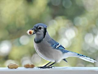 ~Ummm...sometimes you fee like a nut...sometimes you don't...