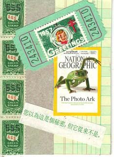 Green Frog atc
