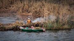 Fumando en pipa (Perurena) Tags: rio orilla border caños juncos vegetación river agua water rionilo persona human tabaco pipa shisha algunlugardelnilo egipto