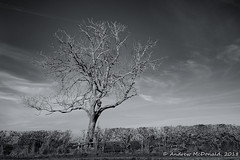 Tree, nr Bottesford (Andy McDonald) Tags: trees england monochrome bottesford blackwhite unitedkingdom valeofbelvoir sky places clouds