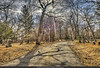 Among the most peaceful places I know. (Pearce Levrais Photography) Tags: cemtery tombstone landscape sunbeam sun burial shadow old historic moody hdr canon 7d markii lowell ma