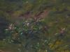 BONHEUR Rosa,1864 - Berger des Pyrénées (Condé) - Detail 25 (L'art au présent) Tags: art painter peintre details détail détails detalles 19th 19e painting paintings peinture peintures peinture19e 19thcenturypaintings 19thcentury tableaux orsay museum frenchpainters peintresfrançais nature figures figure bétail cattle livestock troupeau herd flock berger shepherd mouton sheep vache caw caws chèvre goat agneau lamb animal animals animaux herbe grass man hommes peasant paysan chapeau hat paysage landscape mountain mountains montagne france béret beret