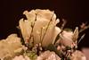 Love (gabrielesabatinophoto) Tags: love sweet rose white shadows battesimo friend help