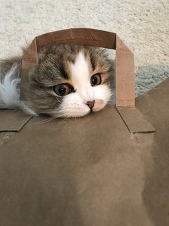 i like to chew on paper bags.