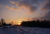 Winter sunset (Evil Prophet) Tags: clouds nature sky snow sun sunset trees winter