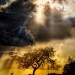 Sun Soaked Scene thumbnail