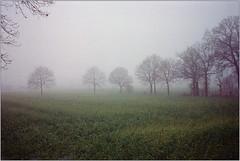 begrenztes Licht II (Ulla M.) Tags: nebel fog bäume trees keinlicht tetenalcolortec revueflex m42 analog analogue reflectaproscan10t umphotoart selfdeveloped dorsten film selbstentwickelt kleinbild 35mm grain
