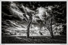 Zalkerdijk bij Zalk (fredbervoets.com) Tags: bomen boom deltawerken dijk dorpsbeeld dorpsgezicht gelderland natuur provincie waterwerken weg wegen zalk zalkerdijk