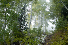 (S.askins15) Tags: snowy snow walk path hike trail foggy weather ominous trees colors green ricoh nature alta utah