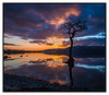 Lone Tree (debraduncan1960) Tags: scotland cloudsstormssunrisessunsets sunset lonetree tree water lochlomond milarrochybay reflections