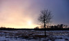 Winter Sunset (1DesertRose) Tags: travel bare scene cold branches weather cloudy trees landscape winter fujifilm elkislandpark canada alberta sunset tree snow colours beauty