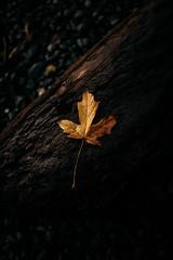 Winter (Zanthia) Tags: autumn canada vancouverisland coast shirley britishcolumbia kanada ca