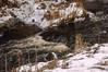 Waywayanda Winter_0177 (smack53) Tags: smack53 stream creek brook water snow winter wintertime winterseason winterscenery waywayandastatepark vernon newjersey nikon d100 nikond100