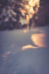 In the shadows (Tracey Rennie) Tags: sparkle inmystreet 52weekchallenge shadows light sunset snow bokeh tree sun