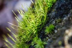 Lullwater Preserve (atlnature) Tags: lullwaterpark decatur georgia unitedstates us
