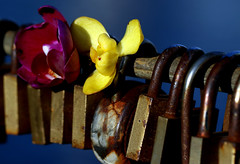 Locks that fasten love (AlfredSin) Tags: alfredsin canoneos760d canonef100mmf28lmacro macromondays macro macrophoto fasteners lovelocks love