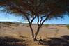 K3AR0184 (aerre64) Tags: aerre64 pentax k3 k20d marocco maroc deserto colori su msabbia atlante