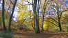 New Forest NP, Hampshire, England (east med wanderer) Tags: hampshire england uk newforestnationalpark ponies nationalpark autumn beech bracken