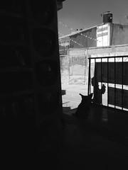 Kika y los garrafones vacios. (Juan Antonio Xic Eseyosoyese) Tags: perrita callejera briones y ls garrafones de agua electropura vacios blanco negro bw nostalgia contraluz la tienda miscelania tristeza frío barrio pobre mèxico nikon coolpix s33 13 enero amiga mascota calle kika casas barandal atmósfera añoranza