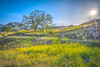 Epic High Resolution Malibu Canyons HDR! Fine Art Malibu California Landscape Photography -- Nikon D800E ! Fine Art Landscape & Nature Photography: Light Beams & Dr. Elliot McGucken Epic Fine Art! (45SURF Hero's Odyssey Mythology Landscapes & Godde) Tags: epic high resolution malibu canyons hdr fine art california landscape photography nikon d800e nature light beams dr elliot mcgucken