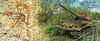 Battle of Kursk (Kambo Dscha) Tags: battleofkursk t34 wwii tankbattle russia 1943 history kambodscha prochorowka