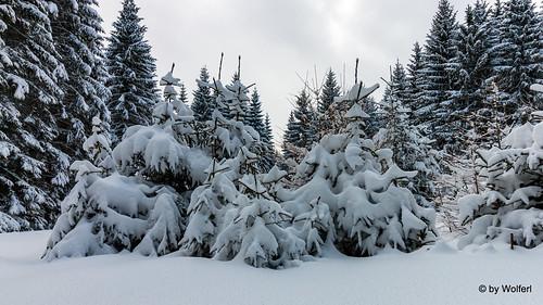 Schneeschuhwandern Pack 20