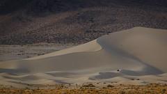 Riding the Dunes (Jeffrey Sullivan) Tags: atv ohv sand dunes outdoor action motor sports travel photography canon eos 70d 70200mm l series lens copyright 2014 october blm bureauoflandmanagement