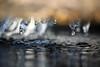 The Winter has to Go! (Rolf-Schweizer) Tags: winter snow ice cold creative canon colour colours fotografie flickr farben fresh schweiz swiss switzerland suisse svizzera stgallertagblatt sky schweizerischerbauernverband flower frühling thechurchofjesuschristoflatterdaysaints toggenburg bauernverband bauer visions cat silence art gettyimage rolfschweizer explore rolfschweizerfotografie